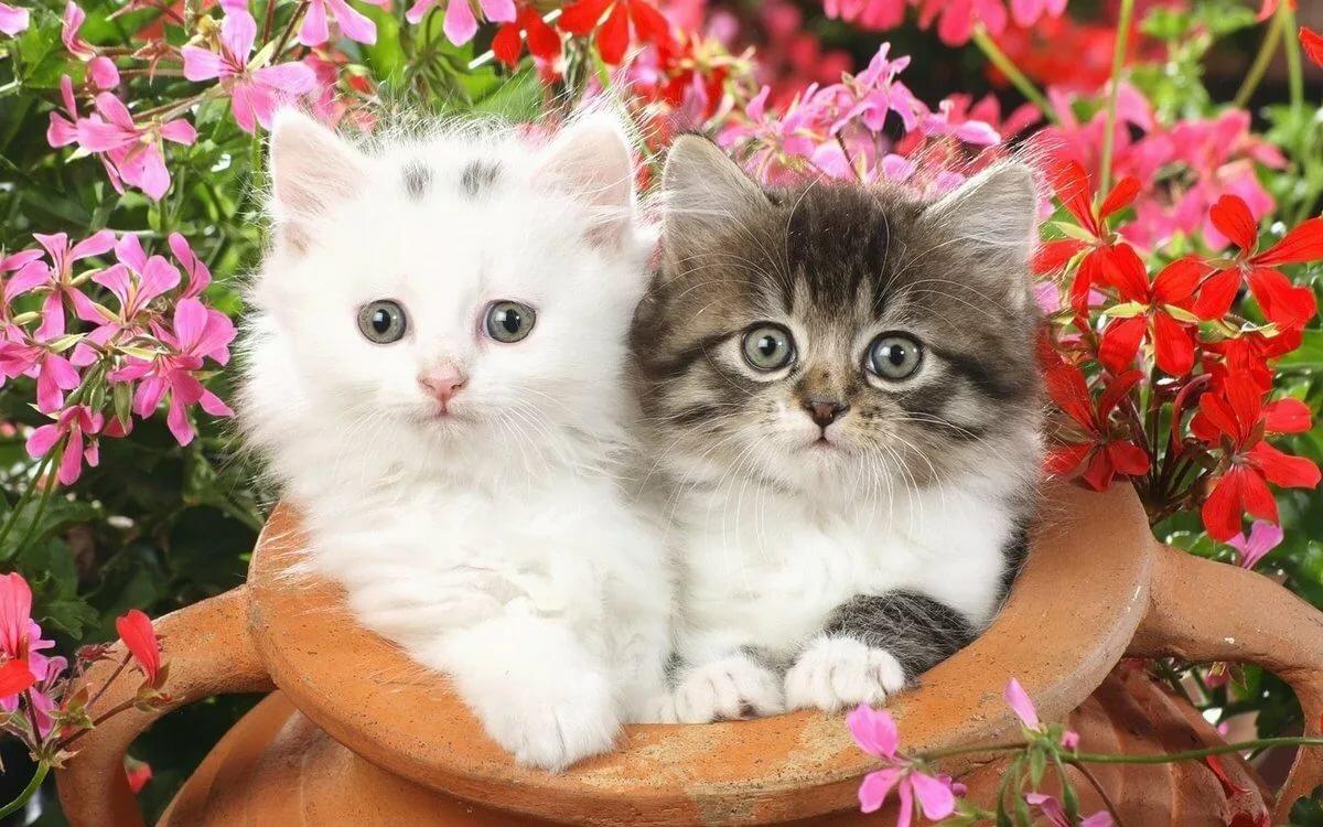 Маленькие котята картинки найди пожалуйста