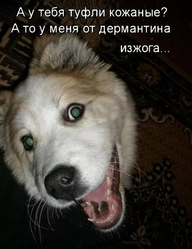 Картинка с надписью про собак