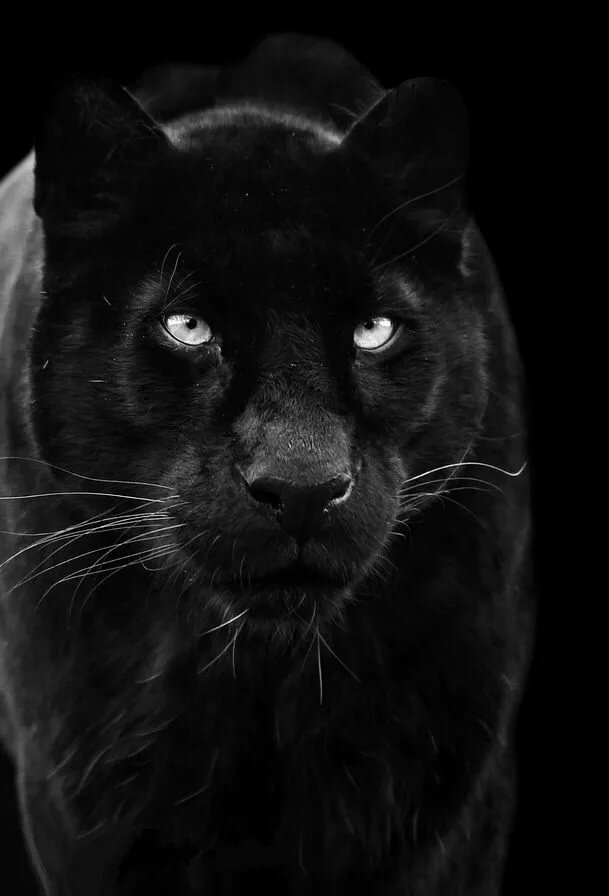 Картинки черные картинки