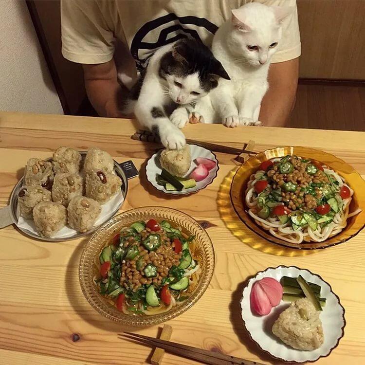разбор сложных картинка за ужином съедай все в тарелке прикольная правило, для карманов