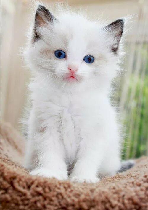 Картинки котиков анимация, фото картинки разрешении