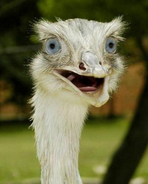 Для создания, прикольные картинки смешные с животными