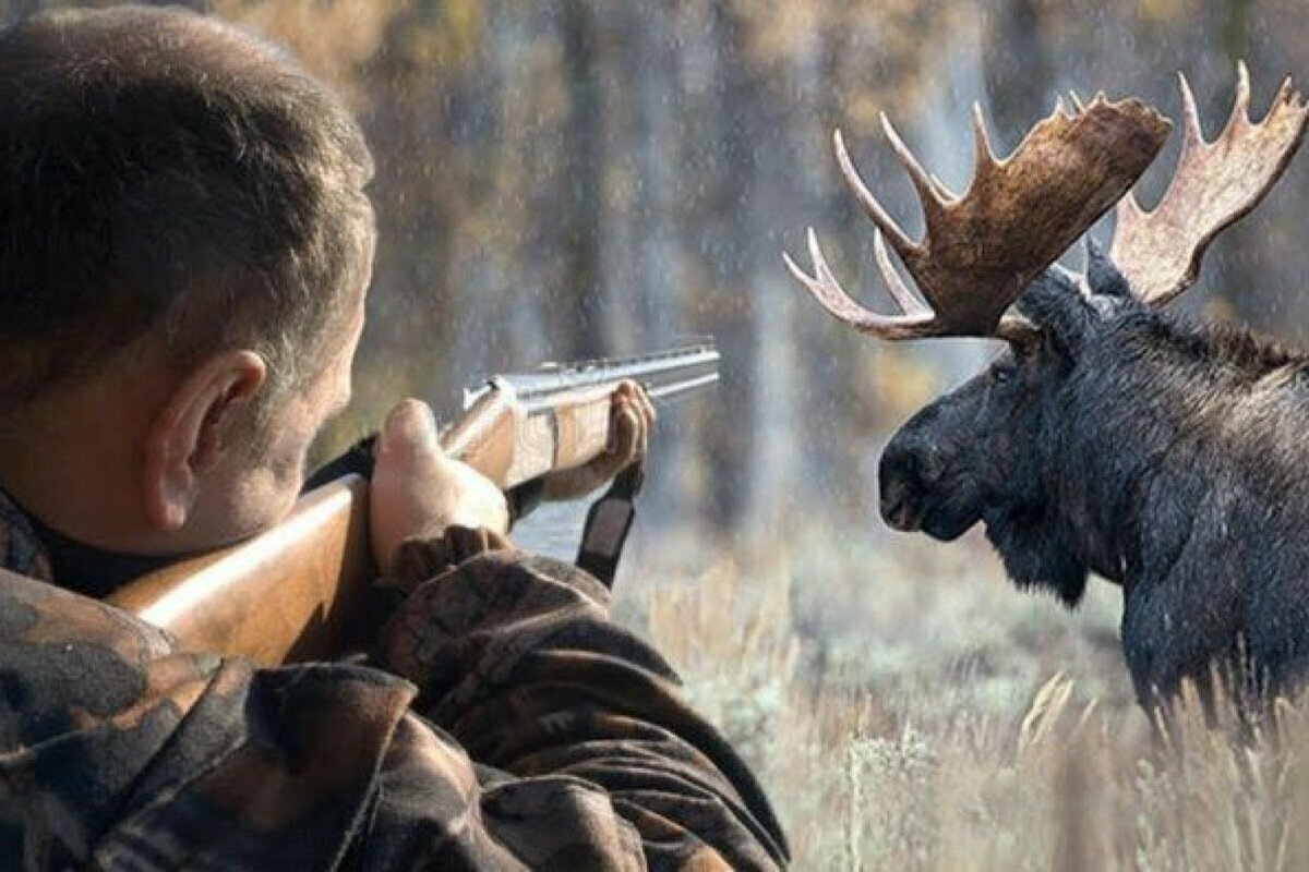 Hunt Expert - приманка для диких копытных животных в Сумах