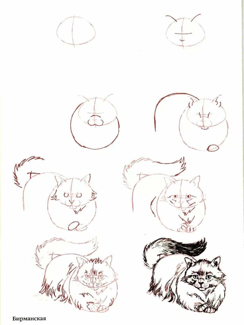 Смешные рисунки по этапам карандашом, днем рождения женщине