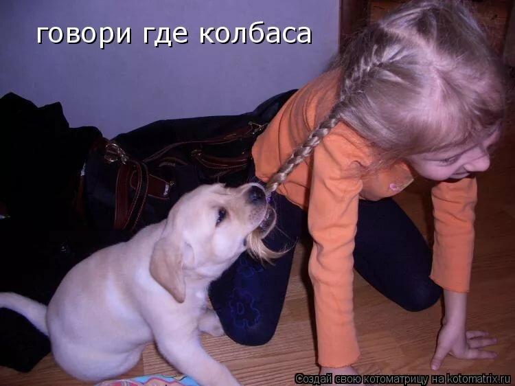Смешные картинка про животных с надписями