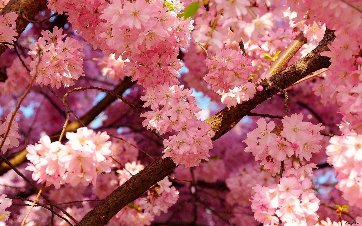 Картинки красивые к весне