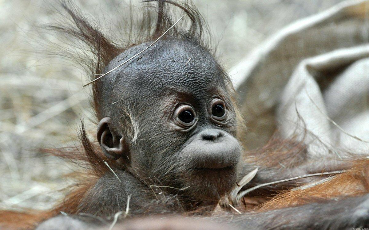 Прикольные картинки на аву обезьяны, днем
