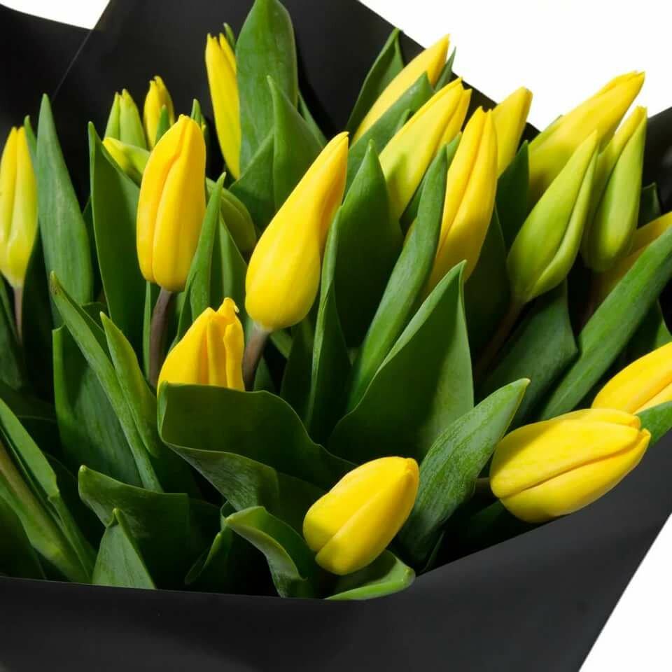 маленькие картинки с тюльпанами отдыхали перпиньяне
