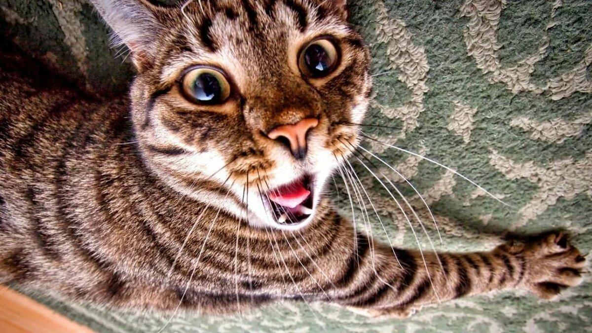 Котик прикольный картинки, сделать открытку своими