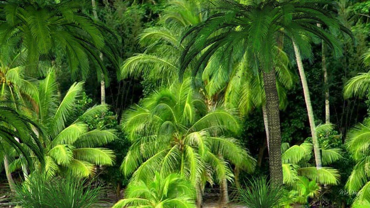 пальмы и лианы картинки чернышов зашел время