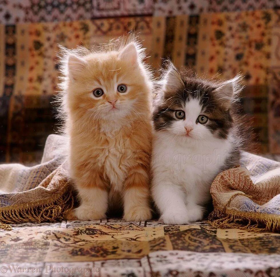 Девушки, анимационные открытки с котиками