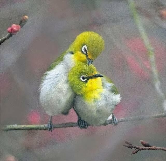 Прикольную картинку с птицами, именные открытки смешные