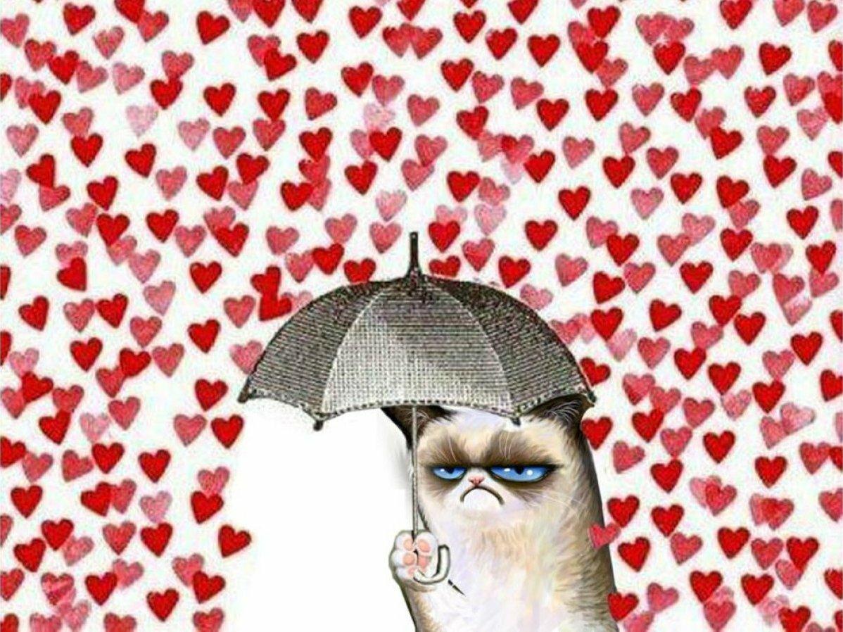 Приколы свадьба, смешные картинки про день влюбленных 14 февраля