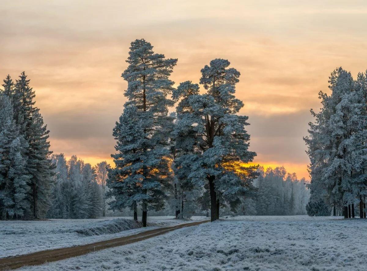 Зимний лес стихи красивые