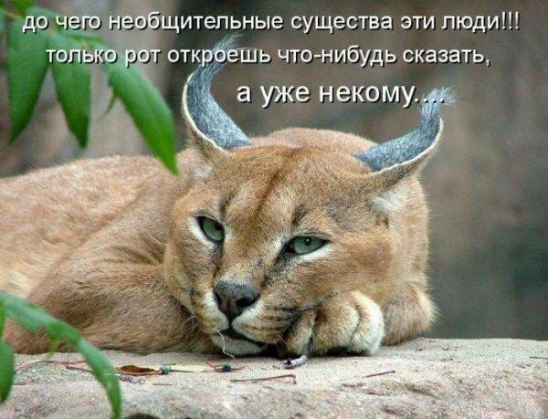 Прикольные картинки надписями животные