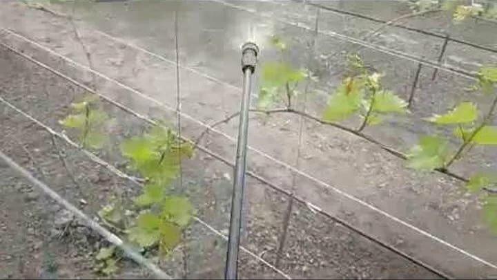 Обработка винограда весной народными средствами
