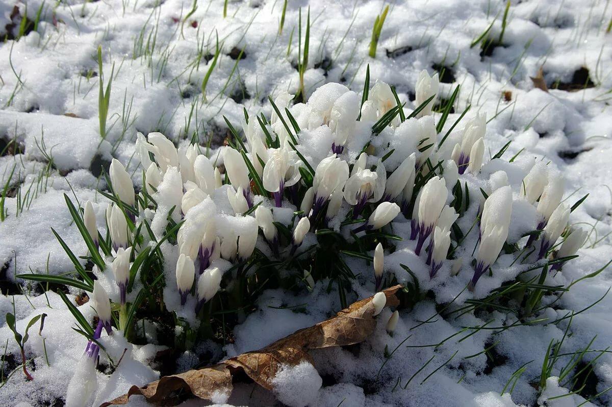 Картинки весна скопировать