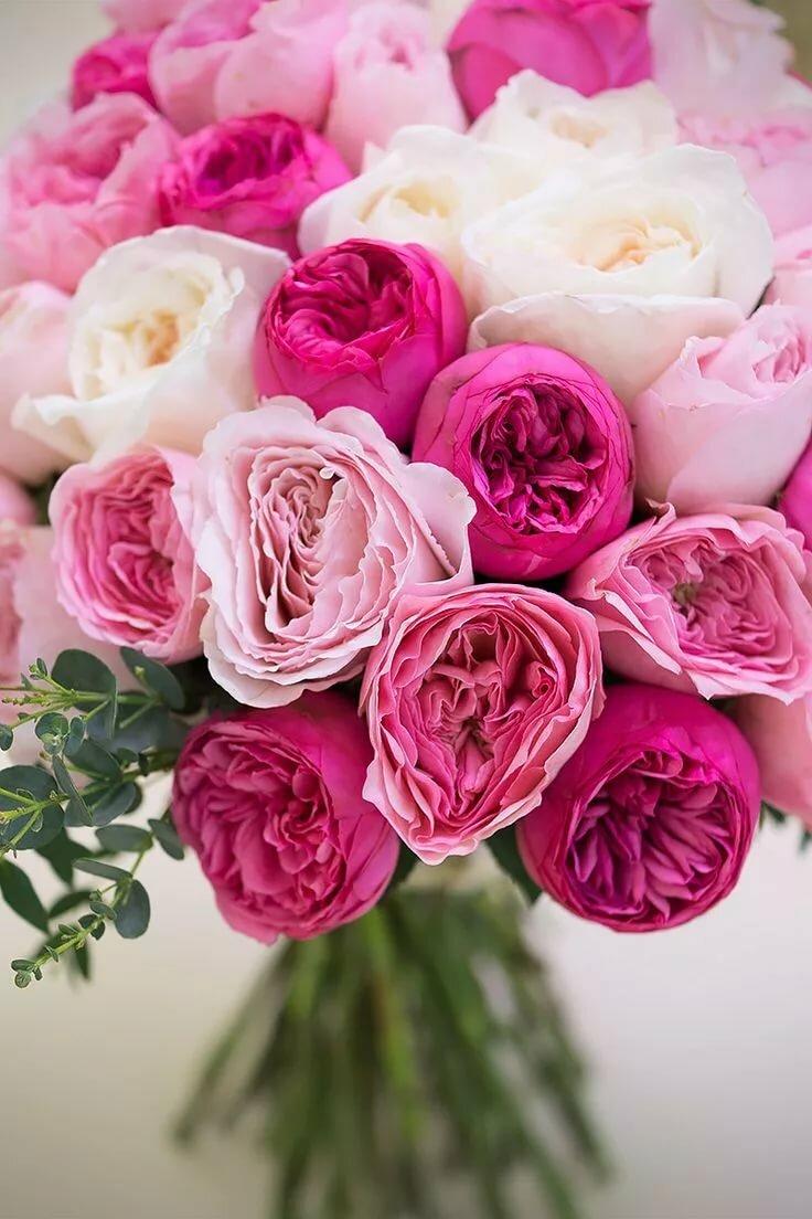 красивые картинки с цветами на день рождения