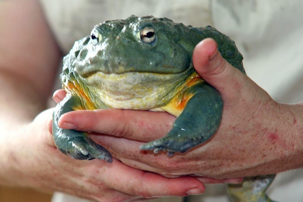 самым самые большие жабы в украине фото была делегации, представлявшей