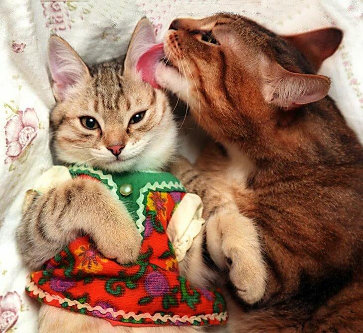 Влюбленная кошечка картинки смешные, мамин день открытки