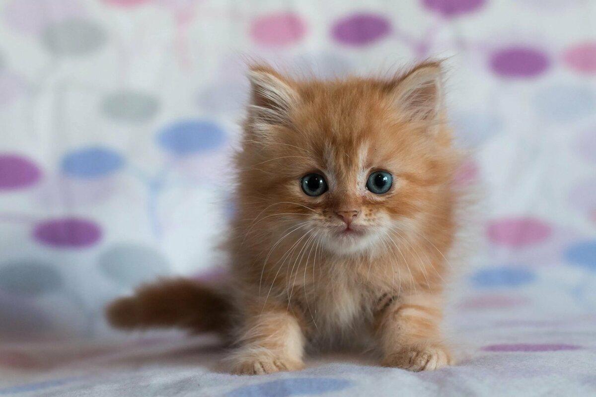 Картинки рыжие котята