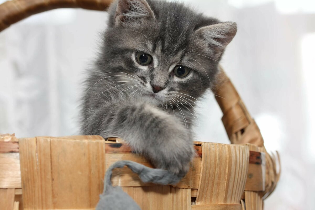 Открытка смешная, картинки для рабочего стола прикольные котята