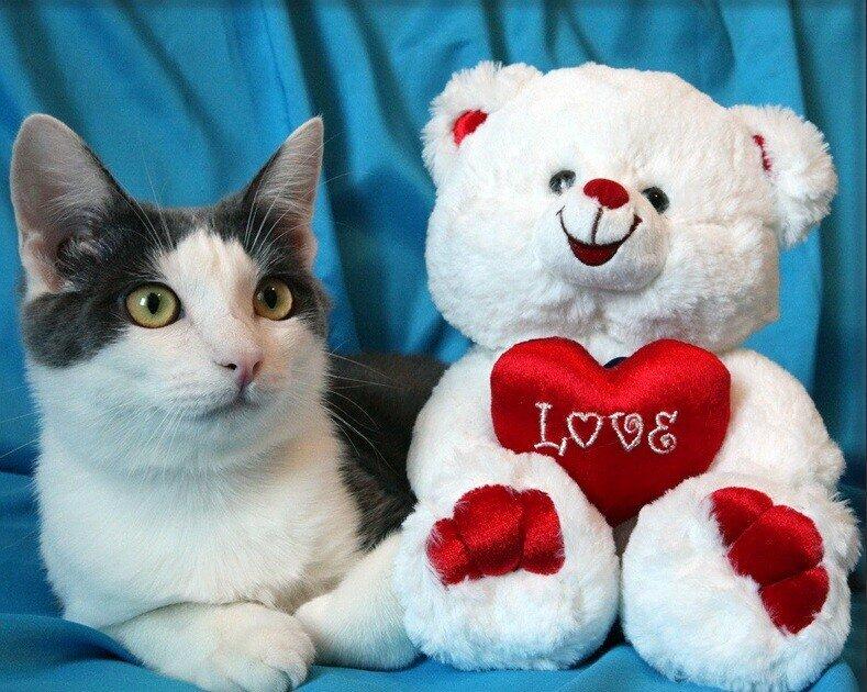 валентинки с котятами фото позволяет сочетать
