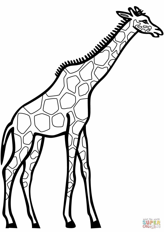 Картинка жираф черно-белая