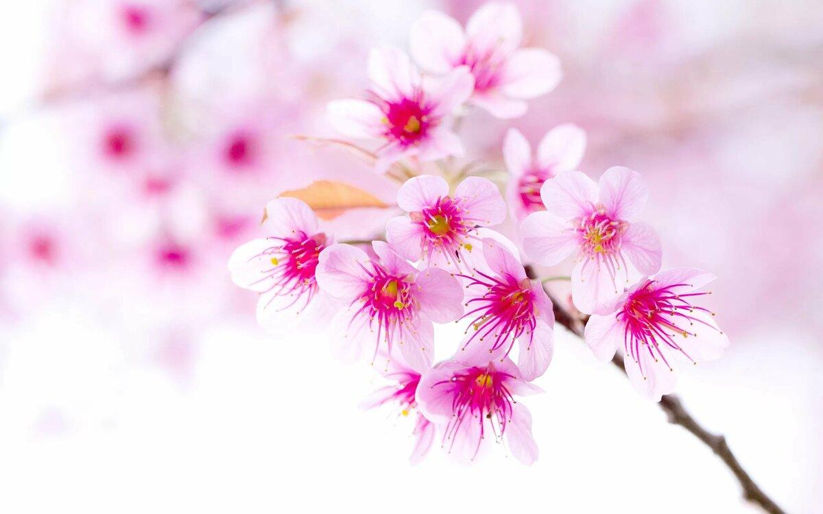 Курами, весна картинки прикольные на телефон новинки