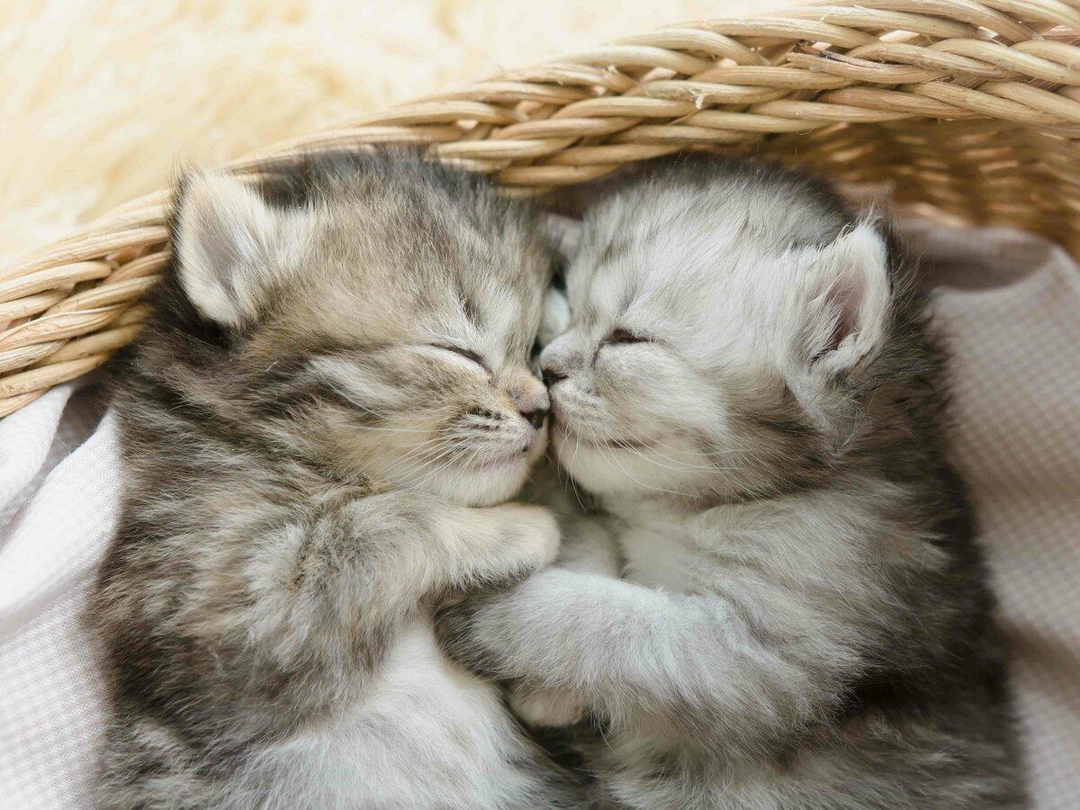 Кот с кошкой в обнимку картинки