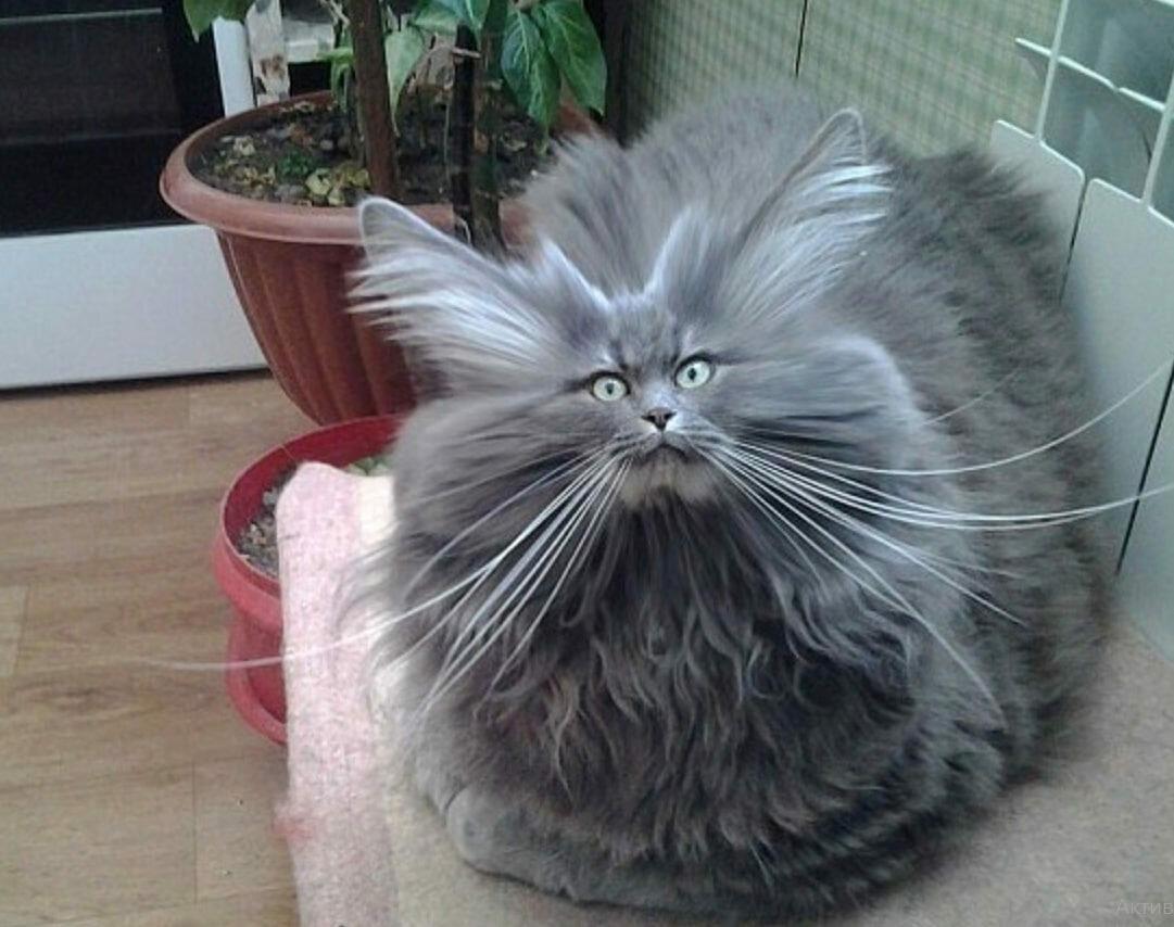 Смешные картинки с кошками смешно до слез