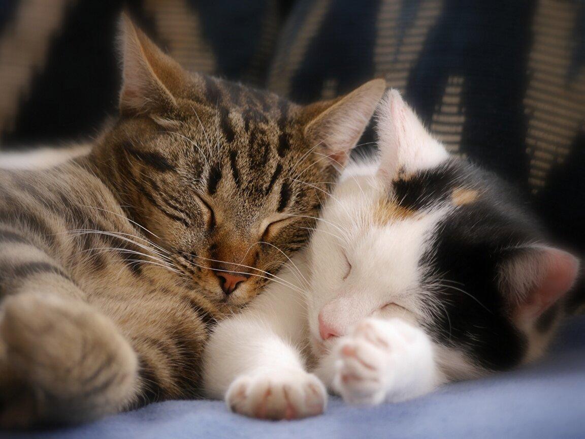 Фон для, картинки обнимаются котики