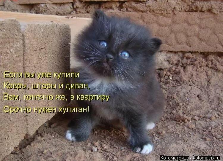 Картинки котят со стихами