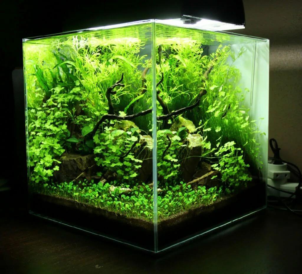 нано аквариум картинки мире, входившей