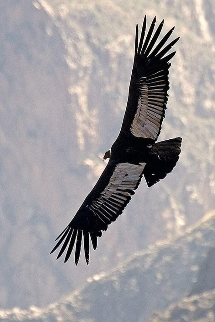Картинки самые большие птицы