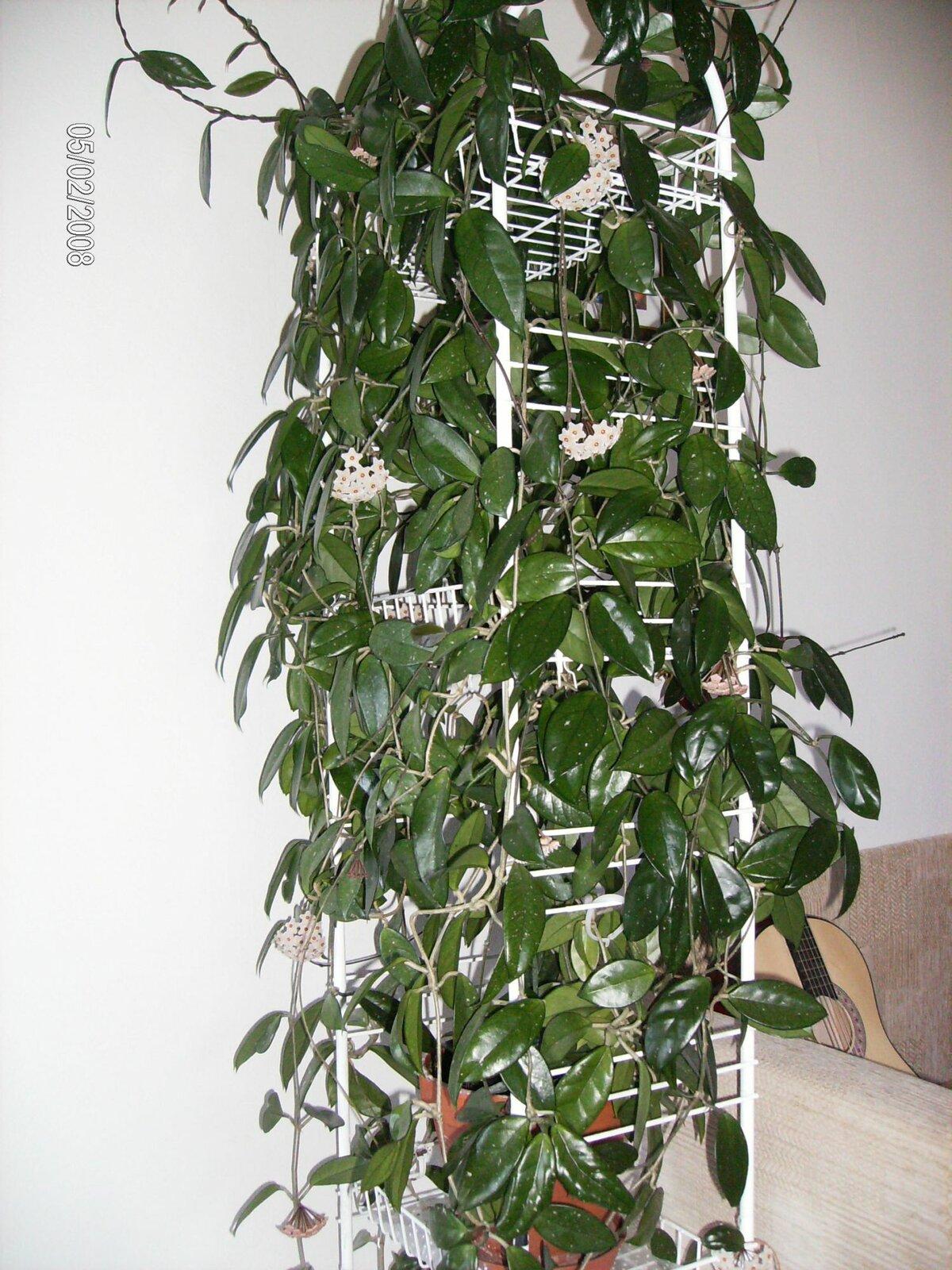Разновидности листьев деревьев с названиями и фото стало модно