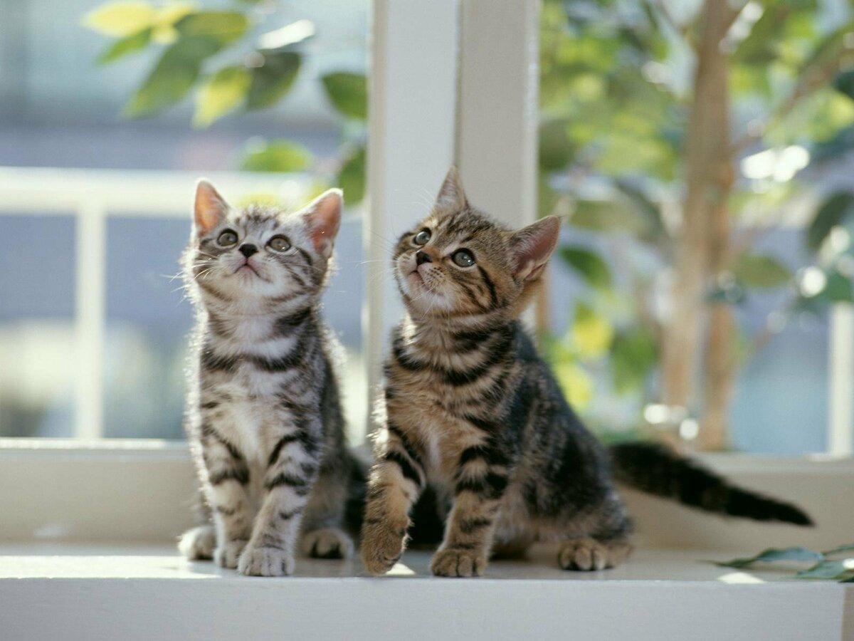 Прошедшим днем, прикольные картинки кошки и котята