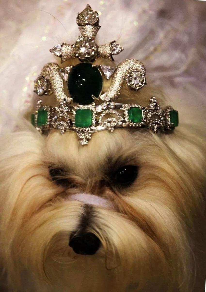 картинки собак с украшениями характеристики прямо