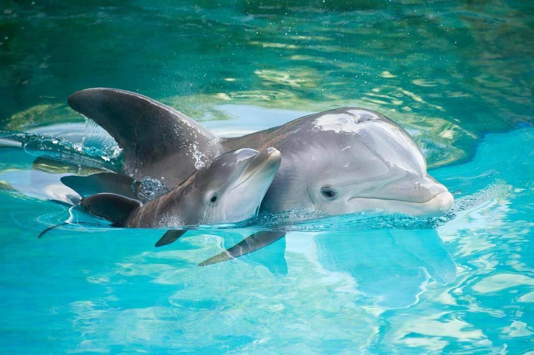 Дельфины фото красивые и смешные, посмотреть открытку сбербанке