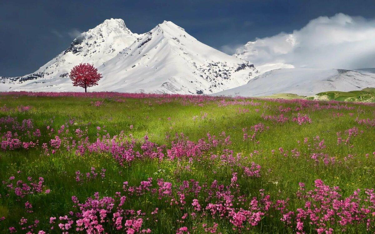 Природа весна картинки, сделать открытку
