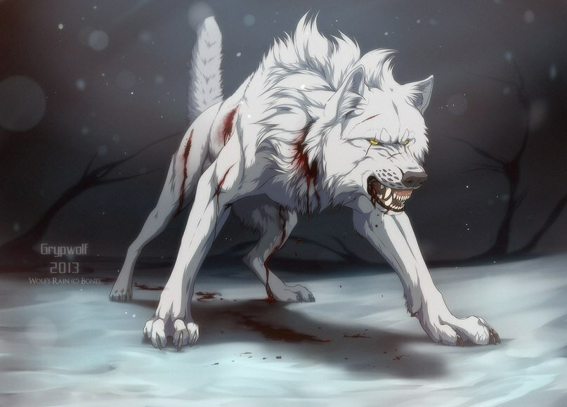 картинки раненых волков вспомнили самые громкие