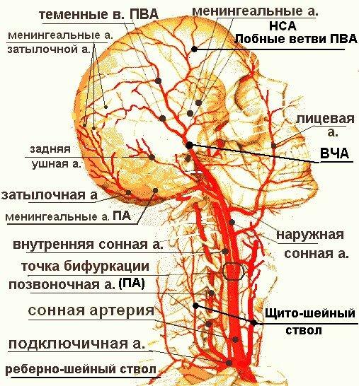 Затрудненный венозный отток при шейном остеохондрозе фото