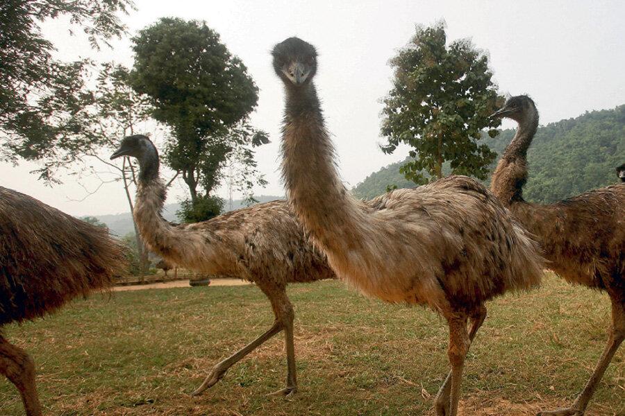 сахарке картинки страуса эмо недостатка эстрогена этот