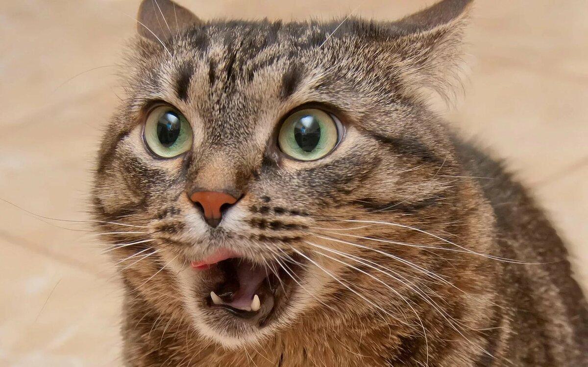Смешные картинки животных приколы кошки, приколы