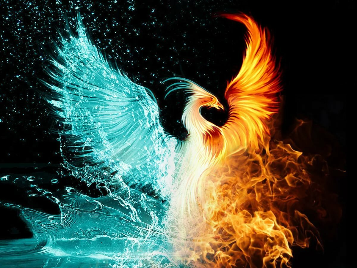 Шаблон днем, картинки птица феникс настоящей