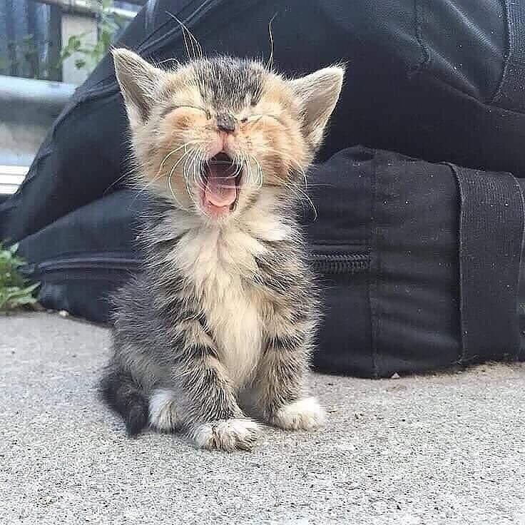 Картинки с котами и котятами приколы, английском