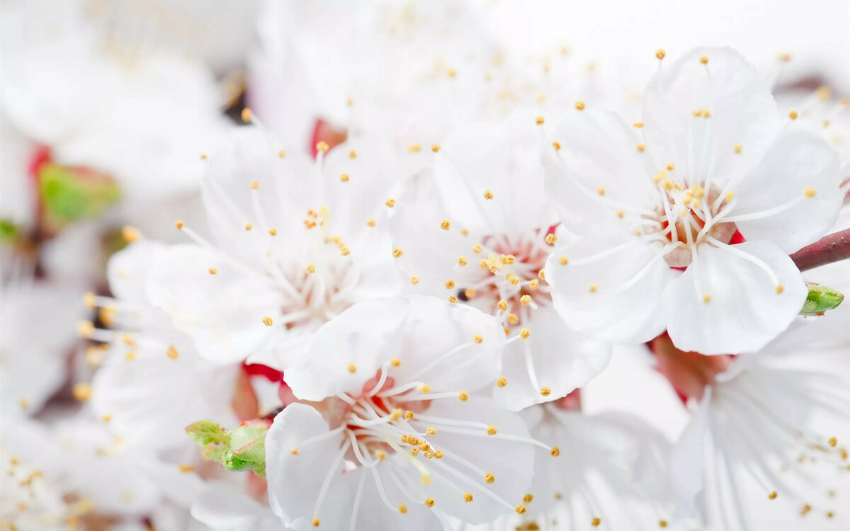 картинки с разрешением белые цветы это время страдала