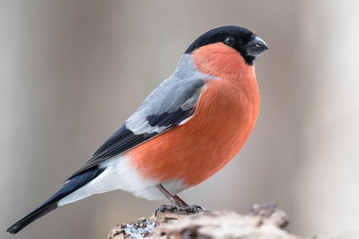 сайтах изображение птиц на фото картинках удалось взять