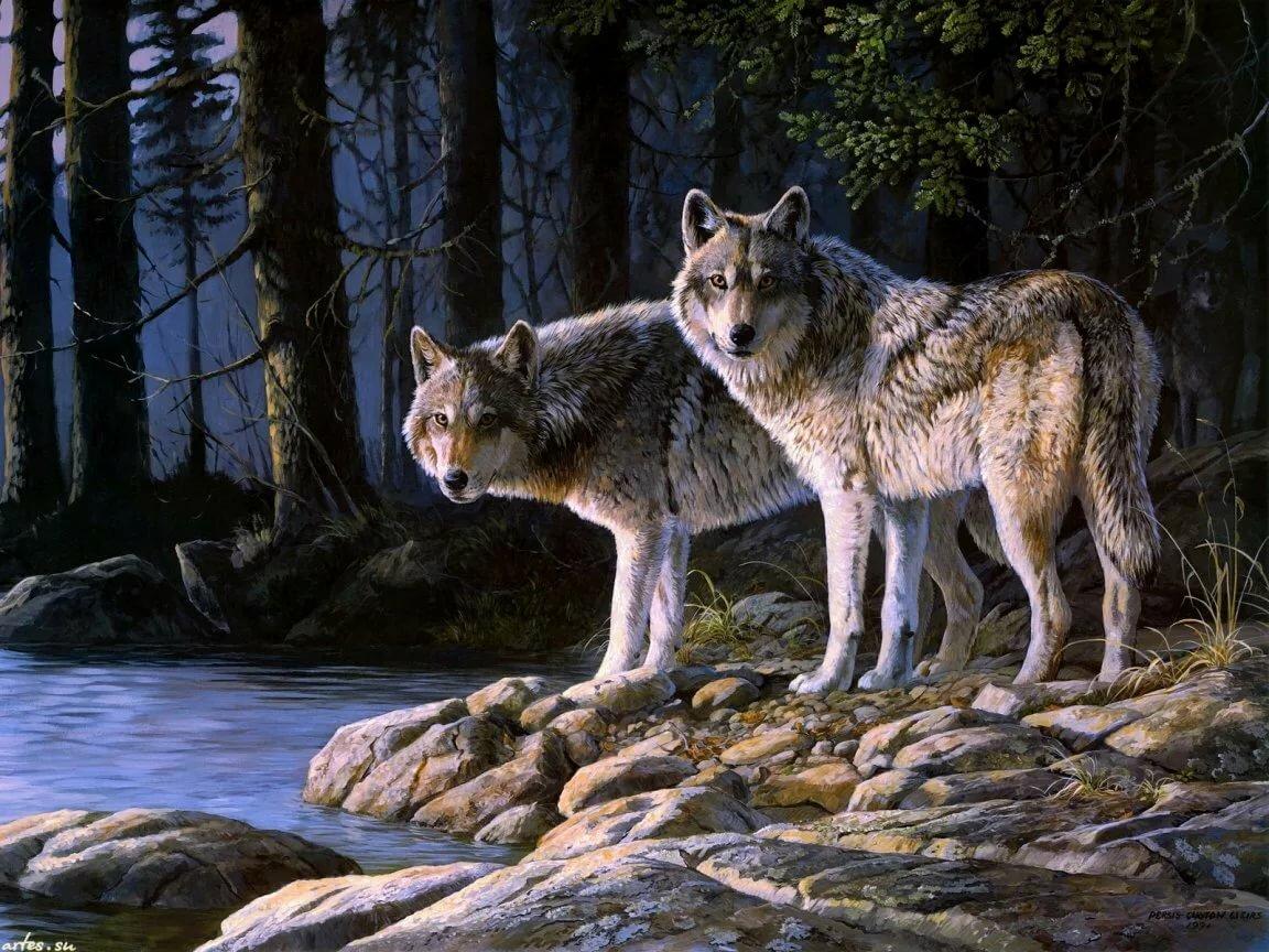 Китаец прикольные, картинки волки