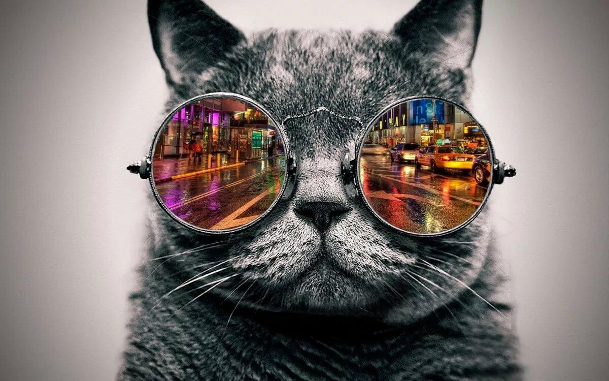Открытки, смешные картинки кошек в очках